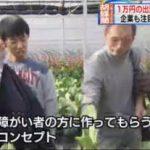 ゆうがたサテライト【1万円出資で胡蝶蘭が】 20171116