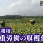 探検バクモン「食べもの革命!最先端植物工場」 20171213