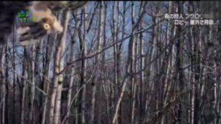 地球ドラマチック「森の狩人 フクロウ物語」 20171217