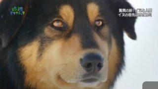 地球ドラマチック「驚異の絆!イヌと人間」 20180114