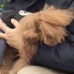 ピエール瀧のしょんないTV▽しょんない犬選手権シーズン2 中部大会 20180129