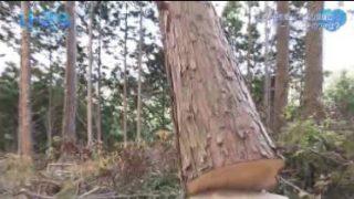 人生デザイン U-29「林業 研修生」 20180213