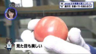 猫のひたいほどワイド▽今が旬の名産品!ジモトが誇る冬春トマト(藤沢市) 20180320