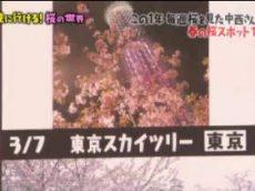 マツコの知らない世界【桜の世界】 20180320