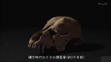 [終]ガリレオX「ヒトとイヌの不思議 科学が解き明かすその絆」 20180324