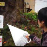中島卓偉のお城へ行こう!せーの、キャッスル!キャッスル!「#16 武州松山城」 20180331
