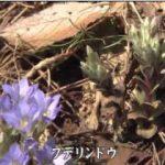 富士山麓日記スペシャル ~春・夏編~ 20180415