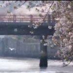 小さな旅「さくら色の水辺で~横浜市 大岡川~」 20180422