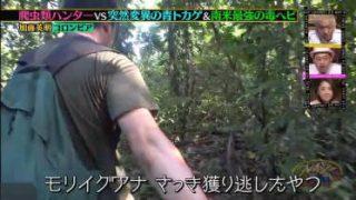 クレイジージャーニー 爬虫類ハンター加藤vs南米最強の毒ヘビ&超希少種 20180425