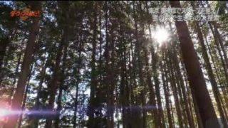 ダーウィンが来た!「密着!東京・奥多摩 生きものたちの熱い冬」 20180513