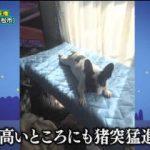 ピエール瀧のしょんないTV「しょんない犬選手権 西部大会」 20180514