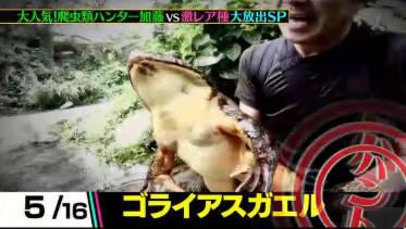 クレイジージャーニー 爬虫類ハンター加藤vs激レア種…全16対決一挙大放出! 20180620