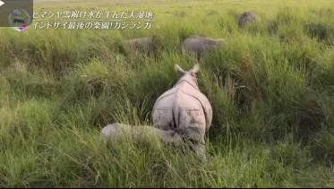 世界遺産「4K特別篇 古代獣がすむ大湿地」 20180610