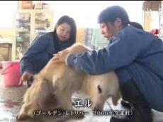 NNNドキュメント「犬の骨の花」 語り 壇蜜 20180708