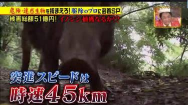 ジョブチューン★『危険迷惑生物を捕まえろ! 駆除のプロ密着SP!』★ 20180818