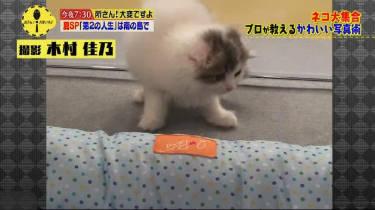 所さん!大変ですよ選「猫大集合 ナゾのキャット・ビジネス」 20180822